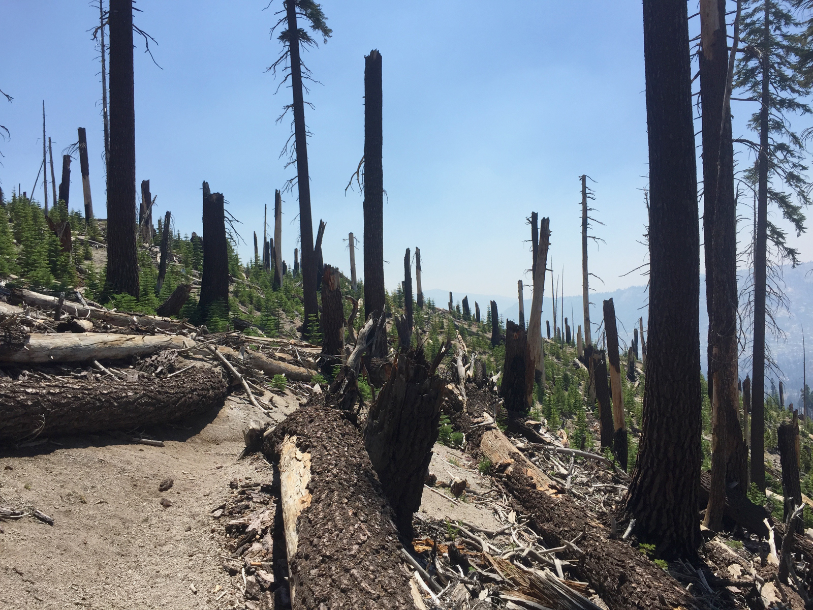 Anyone who has hiked south from Reds Meadow has hiked through this burn. It was a sobering way to end this section.